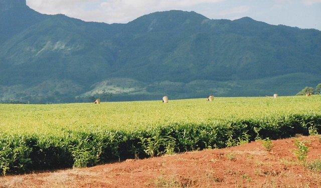 16i2_GTR_malawi-mulanje.jpg