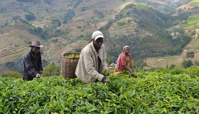 16i4_ART_TEAREPORT_Rwanda_Digital Payment System.jpg