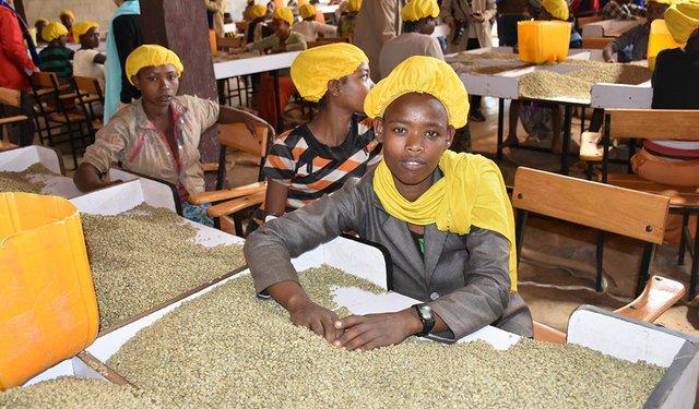 Bellwether Ethiopia