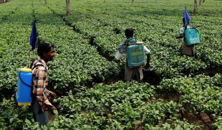 Training tea workers to apply pesticides