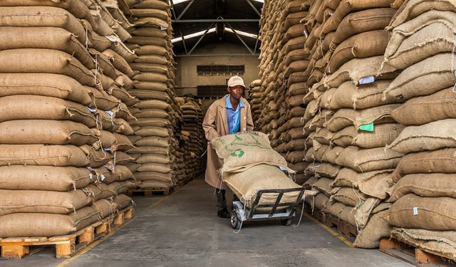Coffee theft continues in Kenya