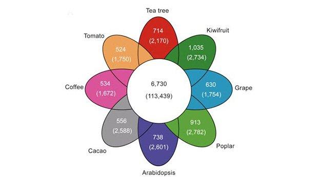 17i3_Tea_Genome_1.jpg