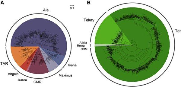 17i3_Tea_Genome_3.jpg