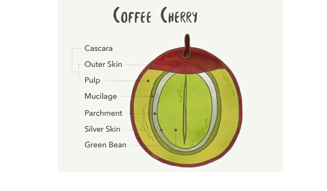 Now is the Time for Cascara