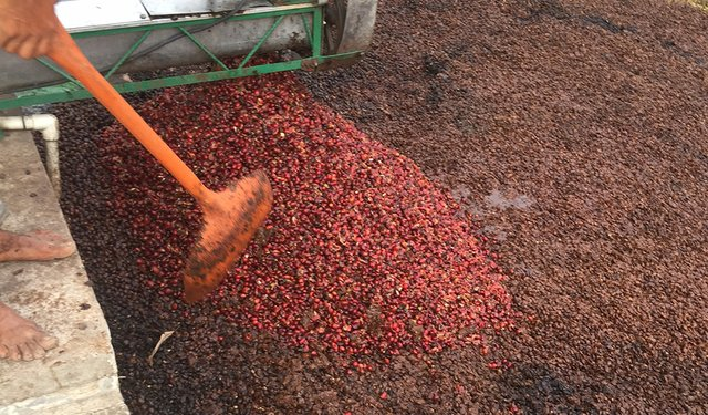 Superheated Solution for Processing Cascara