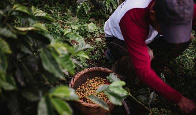 17i6_ART_COFFEE_REPORT_Farmers First