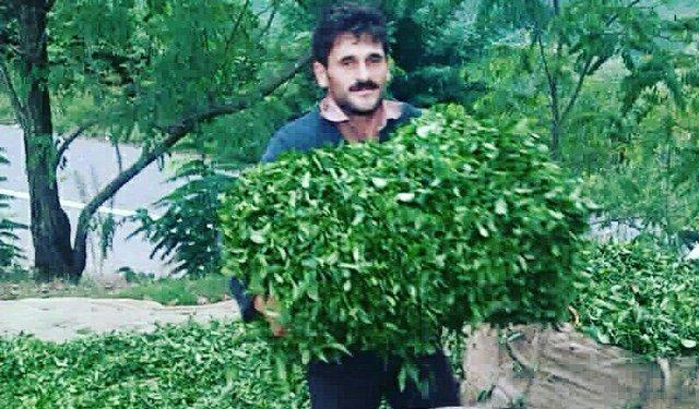 Iranian tea sanctions