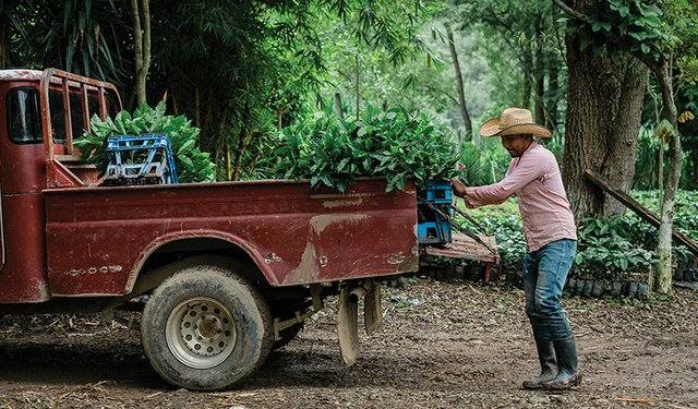 Starbucks Pledges $20 Million Relief for Smallholders
