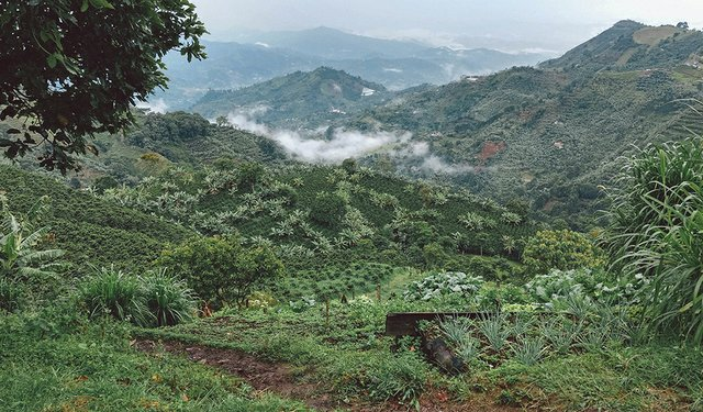 Innovative Crop Insurance Comes to Colombia