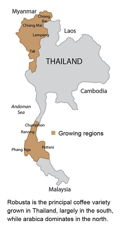 Thailand's Specialty Coffee Strategy