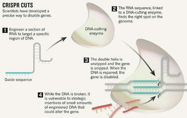 CRISPR: Gene-editing