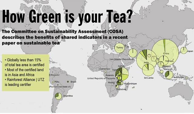 How Green is your Tea?