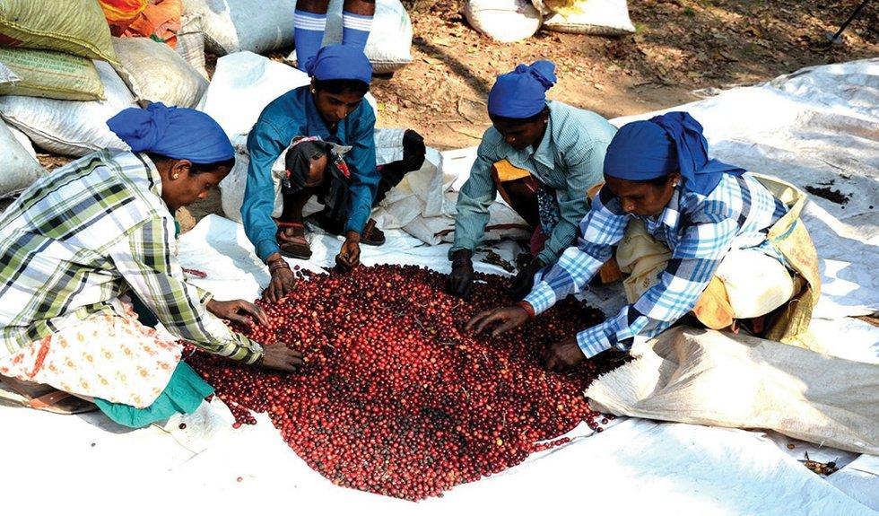 Coffee India