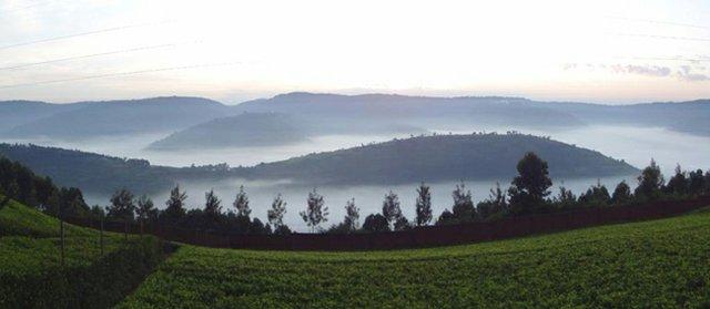 Tea in Rwanda