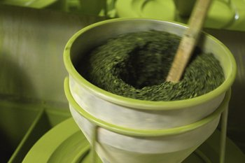 page-15i2_ART_GreenTea_Tencha green tea being funnelled into a stone mill that slowly grind the tea to make very fine Matcha powder.jpg