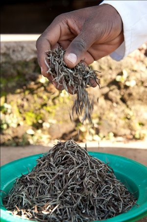 page-15i2_ART_WhiteTea_Elegant White Needles made at Satemwa Tea Estate in Malawi.jpg