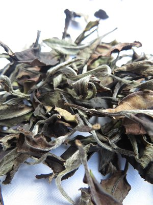 page-15i2_ART_WhiteTea_Tea Hawaii's white tea, grown on the slopes of Kilauea Volcano on The Big Island.jpg