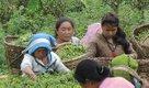 Newsletter-624x366-NepalTea.jpg