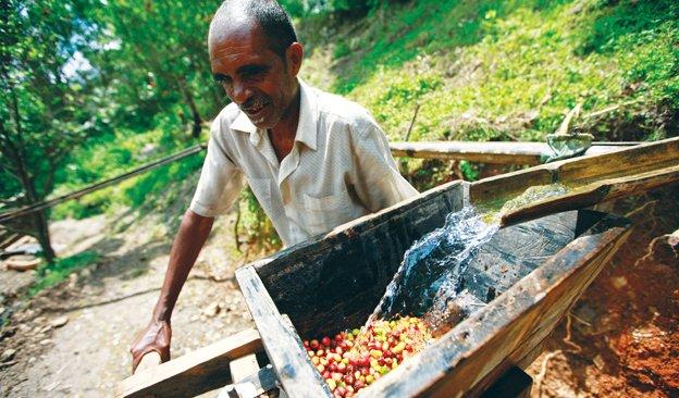 Newsletter-624x366-CoffeeSupply-01.jpg