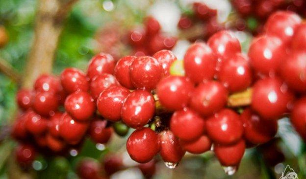 News-624-366px-CoffeeColombia.jpg