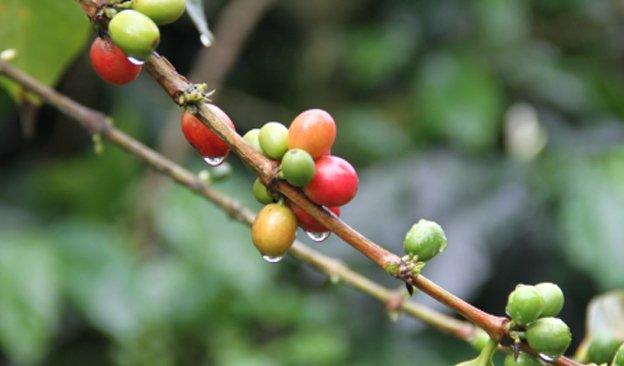News-624-366px-CoffeeColombia-03.jpg