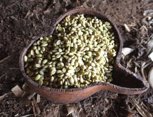 gesha-beans2-300.jpg