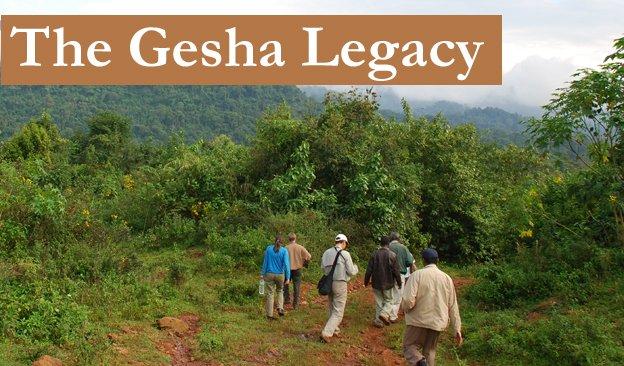gesha-lead-624.jpg