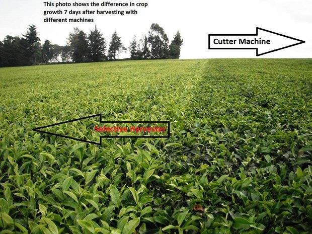 15i4_GTR_Australia_Crop growth-620.jpg
