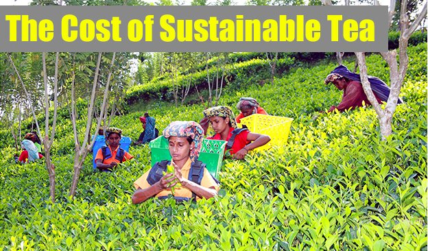 Cost Of Sustainable Tea
