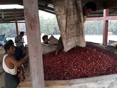 Myanmar's Arabica Awakening