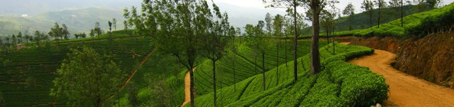 Bogawantalawa Tea Estate